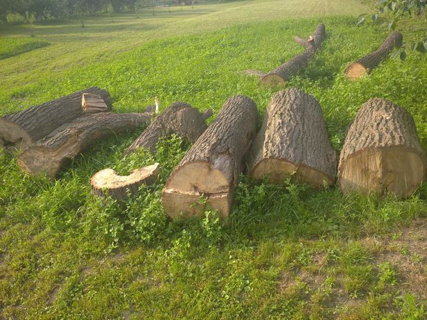 Lipa drzewo rzeźba rękodzieło