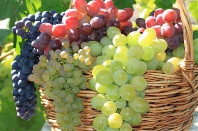 Саженцы винограда Саджанці винограду