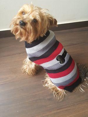 Dzianinowy sweter dla psa