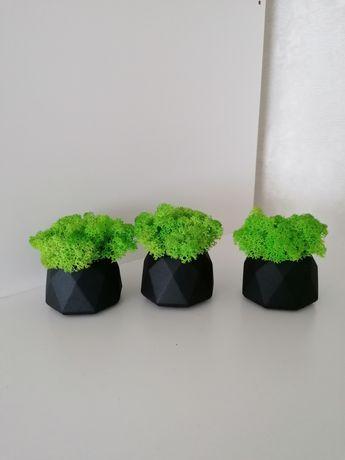 Стабілізований мох /стабилизирований мох