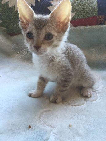 Dou Gato macho com dois meses