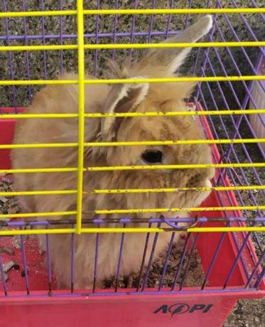 Декоративный кролик+клетка.