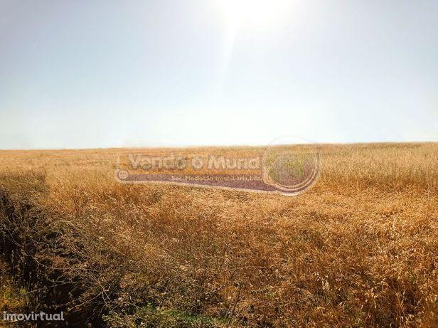 Terreno em Salvaterra de Magos (S370)