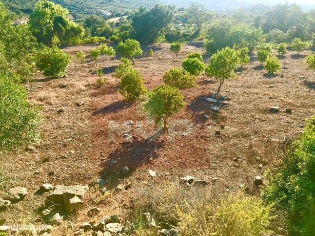 Terreno com viabilidade de construção em Faro