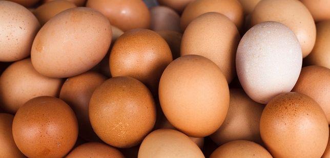 Jajka wiejskie Eco