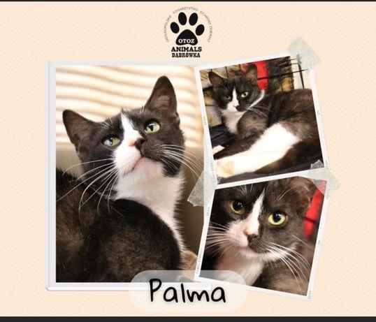 Znaleziono czarno-bialą kotkę-Palma gotowa do adopcji!