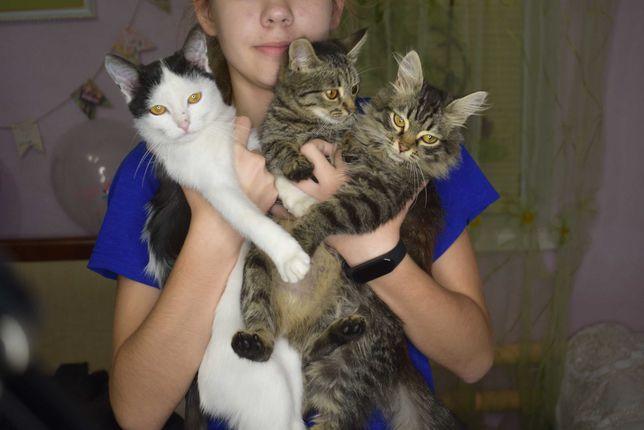 Волшебные котята.Мышеловы. Ручные, ласковые. Мальчики и девочки