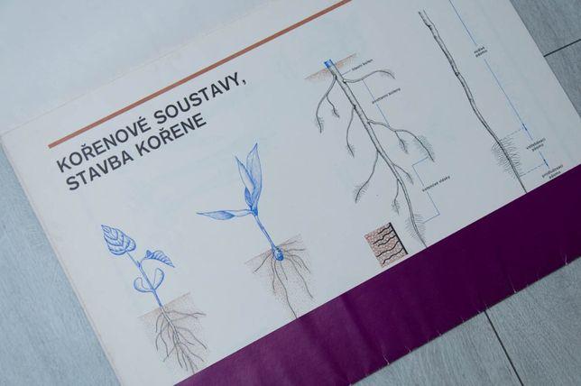 stare tablice botaniczne, vintage