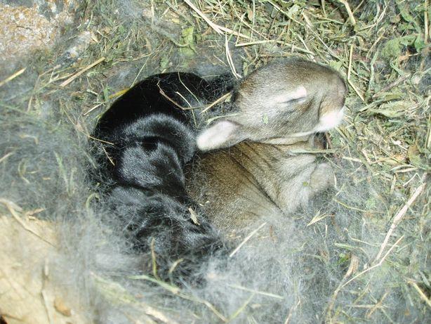 продам кролики необычной породы