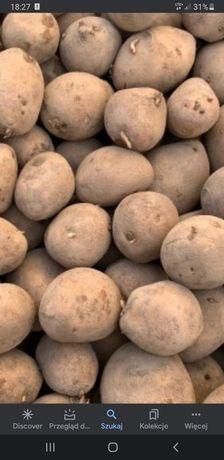 Ziemniaki mozliwy transport