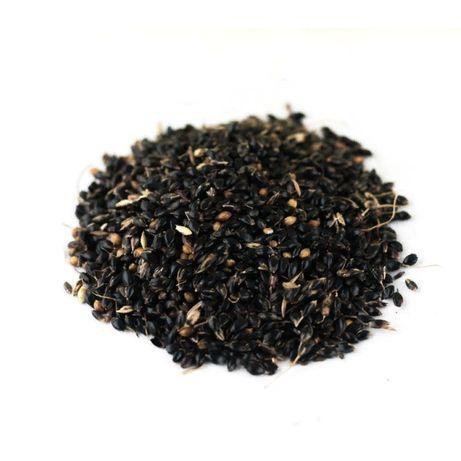 продам семена суданки черной