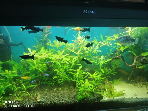 Oddam roślinki akwariowe