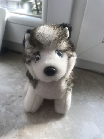 Nowy pluszak pies