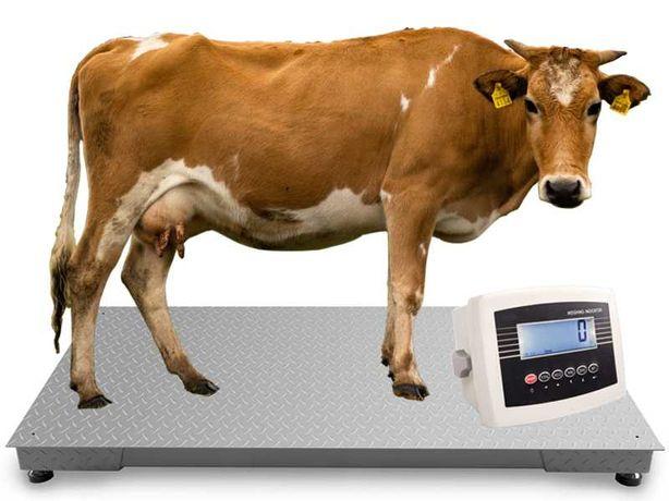 Waga Inwentarzowa 1x2,2m 5T 5000kg Bydła Krów Byków Świń Wysyłka