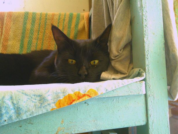Найден Чёрный кот