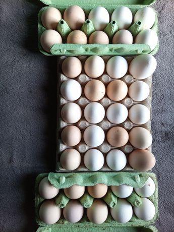 Jajka duże z wolnego wybiegu z ekologicznego gospodarstwa