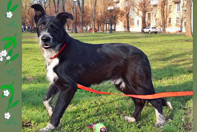 Крупный щенок Мюнхен 6,5 мес в семью.