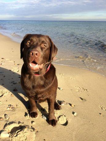 Reproduktor Labrador