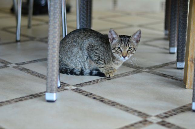 Котенок котята ищет дом в добрые руки