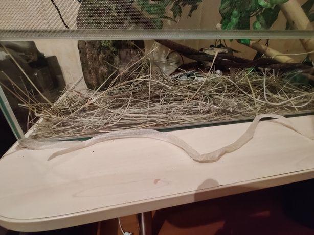 Выползок змеи (сброшеная шкура)