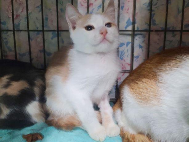 рыже-белый котик Енесей ищет маму и папу 3 мес. Котята кошечка котенок