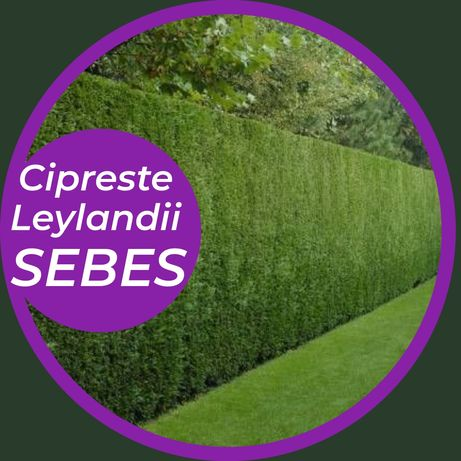 Ciprestes Leyland