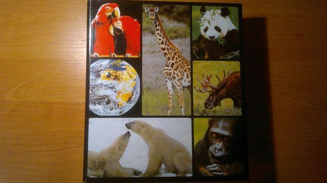 Папка с изображением животных