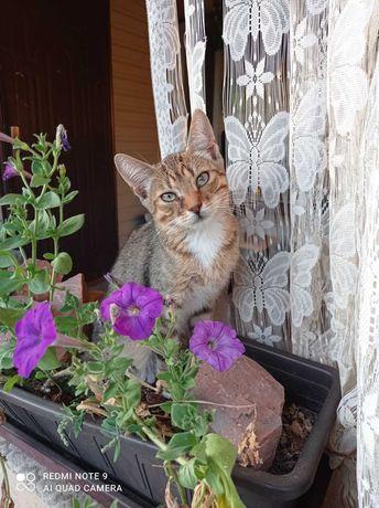 Кот Василий ищет дом