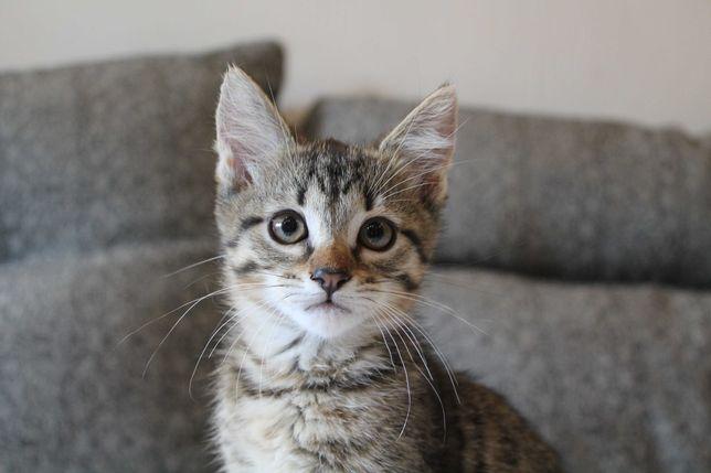 Котенок девочка (4 месяца) ищет семью