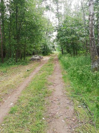 Działka rekreacyjna- Boruszyn -5200m2