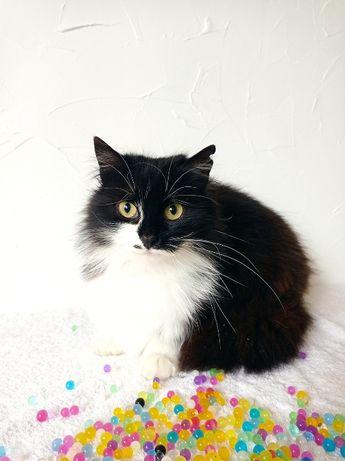 Черная кошка с мушкой на мордочке, 1 год