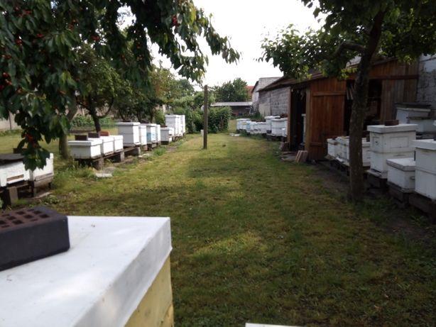 Rodziny pszczele i odkłady