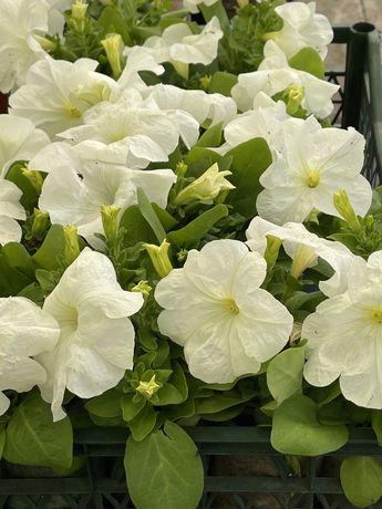 Продажа цветов оптом и в розницу