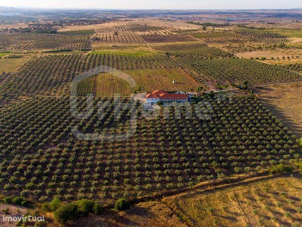 Monte Alentejano com 5 quartos, vinha e olival