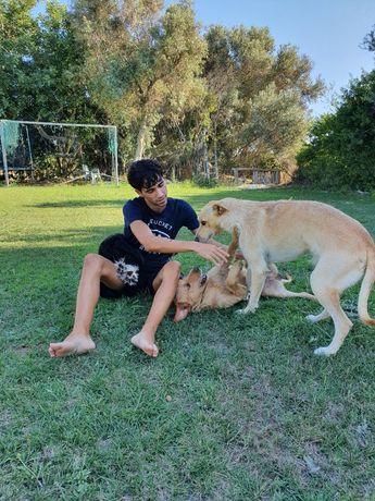 Pet Sitting/ Dog Walking Faro
