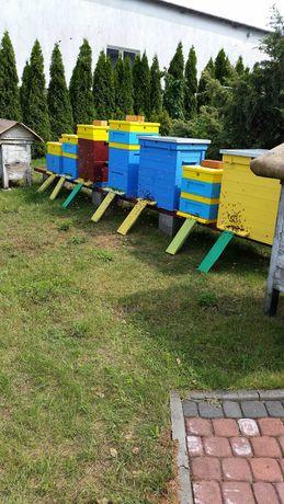 Pszczoły, odkłady,