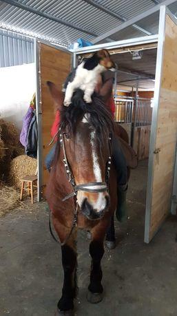 Sprzedam konia do rekreacji