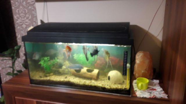 Akwarium z wyposażeniem mozliwy transport