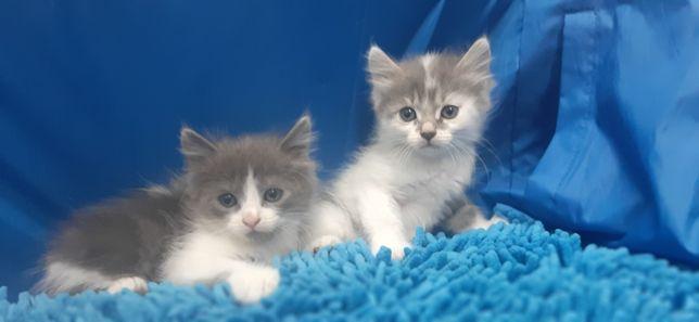 Кошечки в хорошие руки