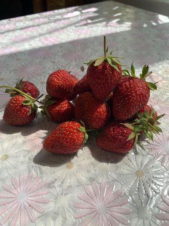 Клубника ягода домашняя/ Ягода полуниці солодка