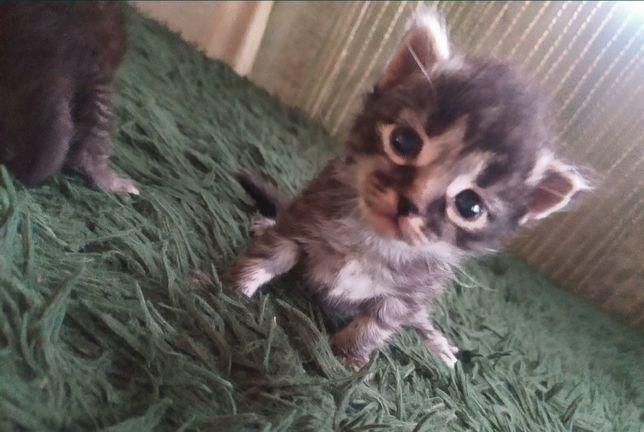 Котята котик кот