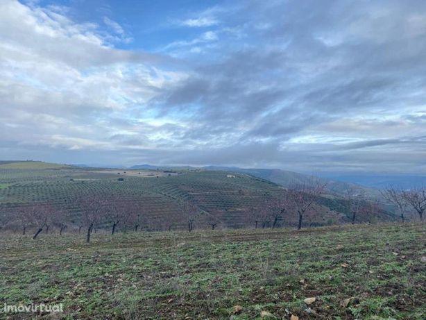 Excelente terreno agrícola situado na região do Douro Int...