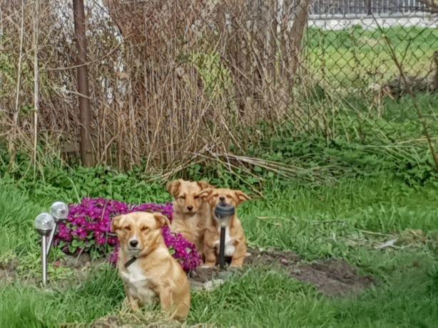 Szczeniaki,  pies i suczka