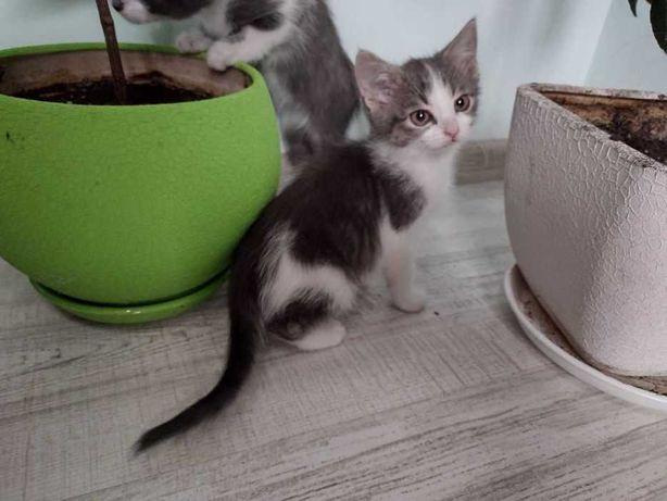 Мурчащие котёночки ))