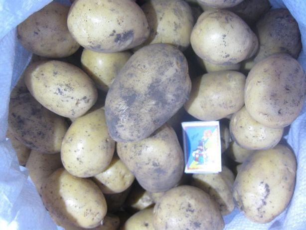 Продам картоплю 4 грн/кг