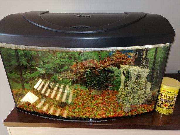 Akwarium Diversa 60l+wyposażenie +rybki