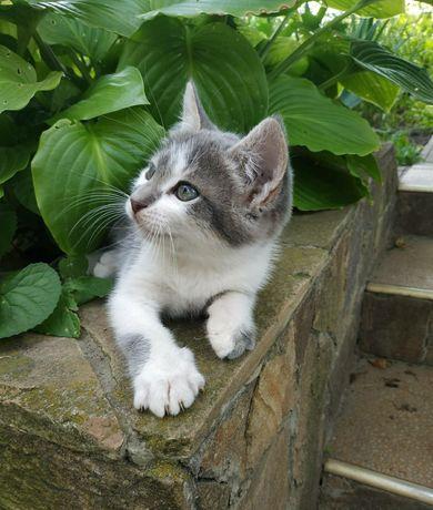 Котенок 2 месяца мальчик в добрые руки, котята, кошка, кот, котик