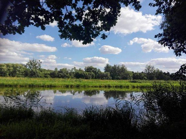 Staw Hodowlany o powierzchni 4,62 ha w Częstoborowicach