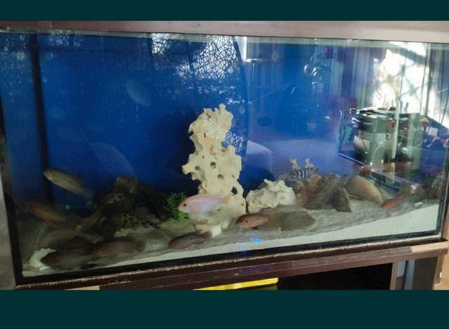 Продам большой аквариум под ремонт