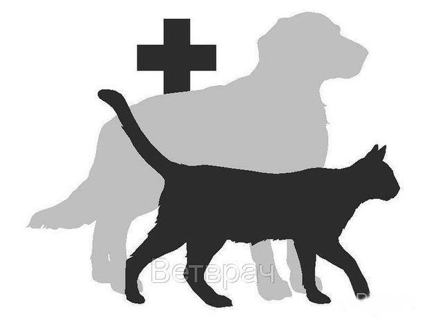 """Стерилизация, кастрация котов, кошек и собак. """"Мягкие лапки"""""""